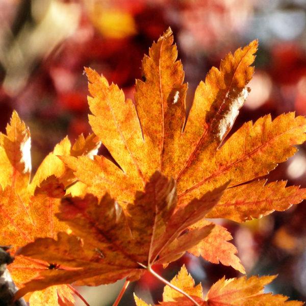 Autumn 1