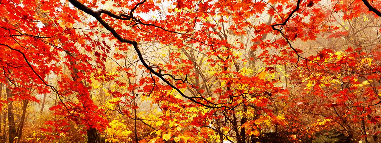 Best Asia Autumn Tours