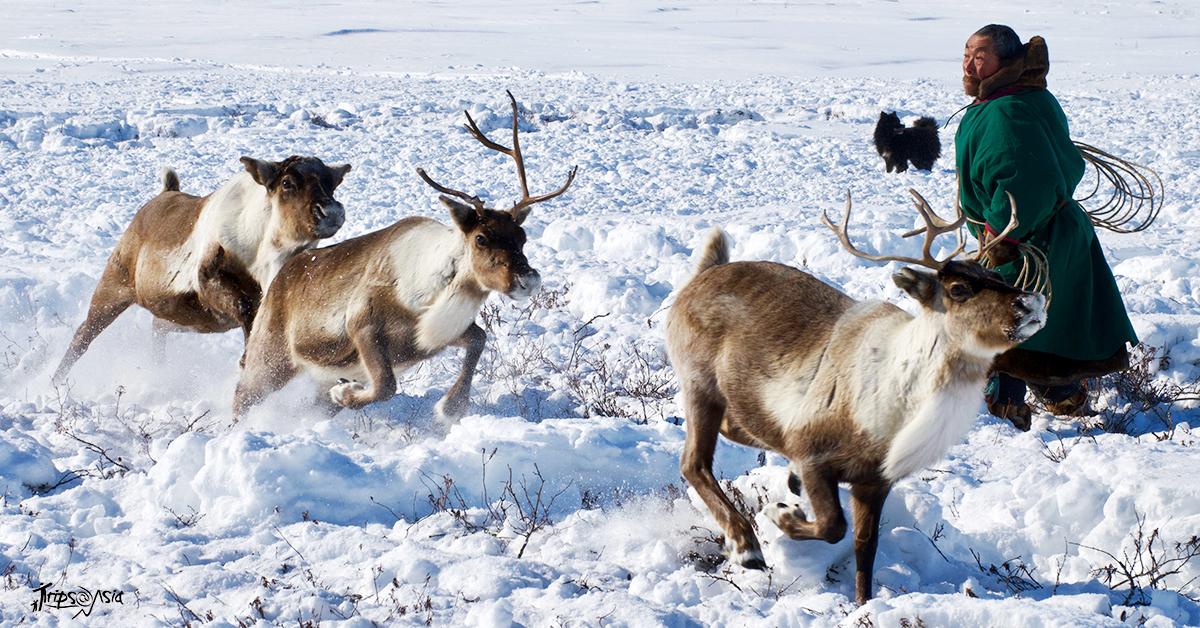 Russian reindeer herders