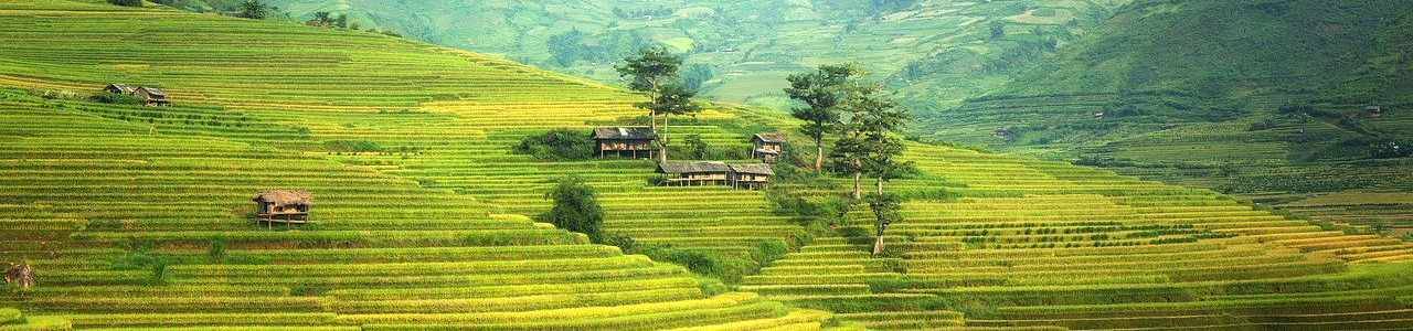 Travel To Asia Rice Field In China